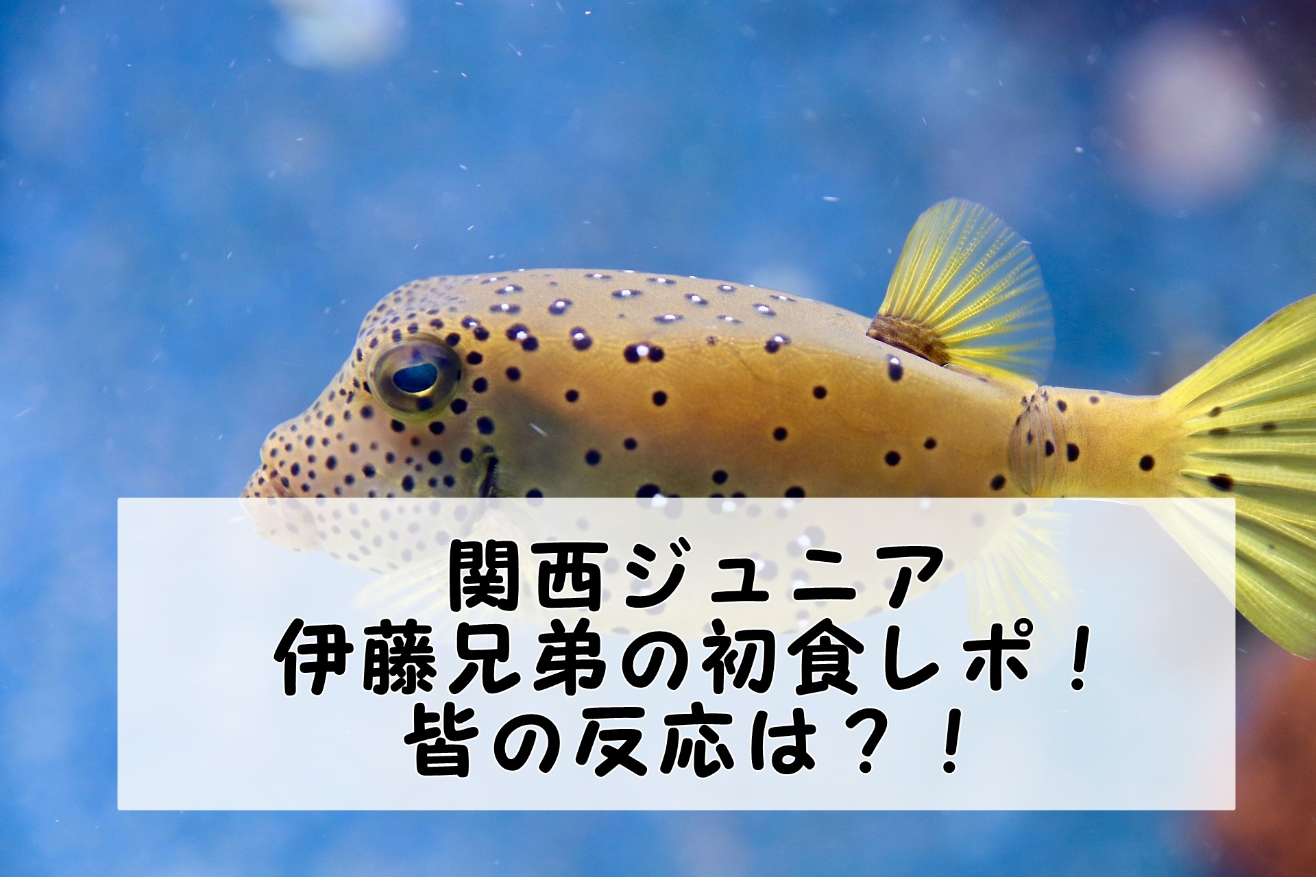 関西ジュニア|伊藤兄弟初レギュラーのロケ地は?食レポの皆の感想をまとめてみた