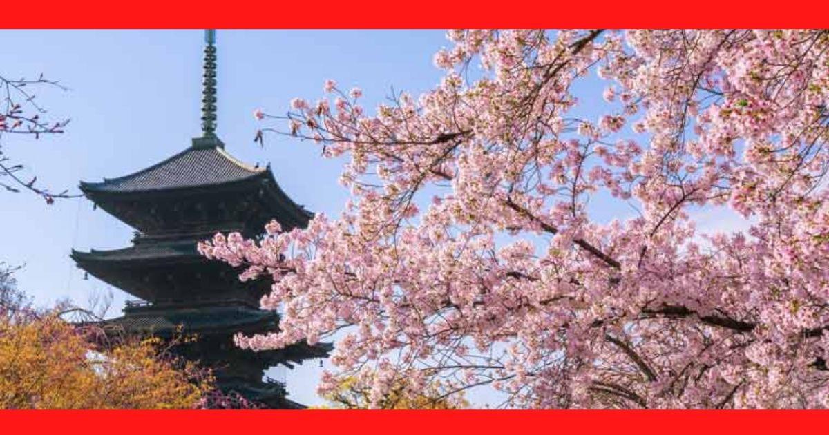 【京都府】お花見おすすめ穴場スポット5選の|混雑状況と駐車場の完備は?