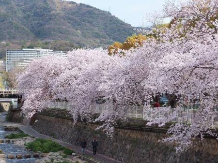 映画「思い、思われ、ふり、ふられ」の実写化のロケ地の場所は兵庫県!?